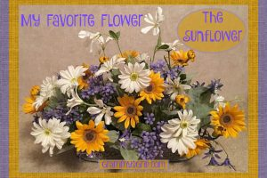 MY FAVORITE FLOWER – THE SUNFLOWER
