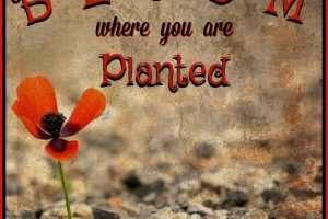 bloom where you are planted inspiration