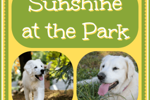 Inspiration - Sunshine at the Park
