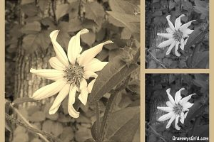 photography black and white wildflower collage