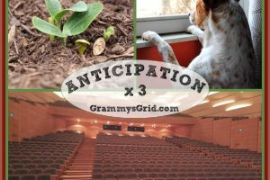 ANTICIPATION X 3 (Word Prompt) #writing #prompt #WordPrompt #anticipation #ragtag #seeds ##waiting #dog #theater #movies