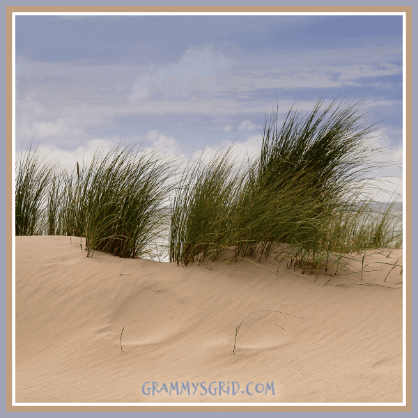 DUNE - WORDLESS WEDNESDAY #dune #wordless #wednesday #WordlessWednesday